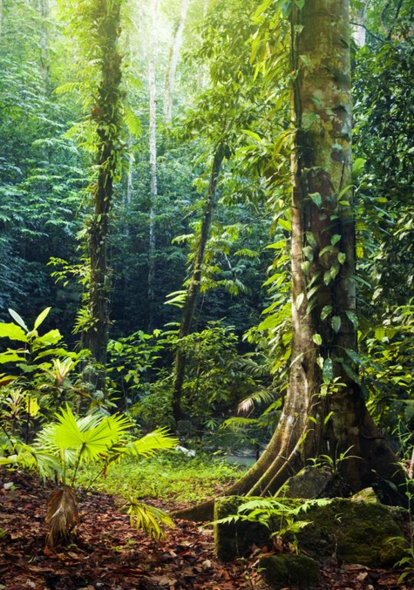 Den tropiske regnskov – et undervisningsmateriale til naturteknologi mellemtrin