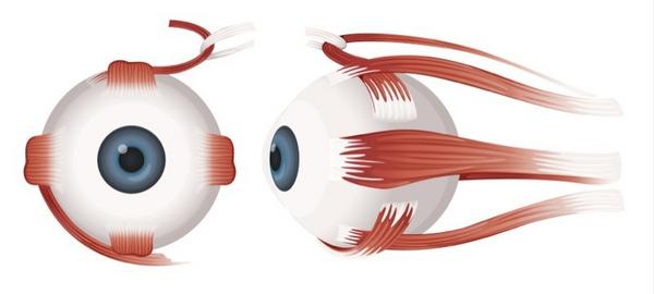 Øjet – et undervisningsmateriale til naturteknologi mellemtrin