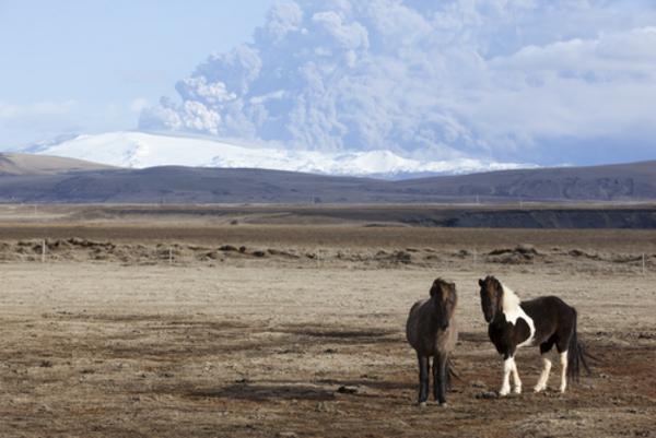 Den islandske hest – et undervisningsmateriale til naturteknologi mellemtrin
