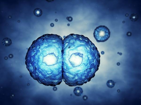 Celler – et undervisningsmateriale til naturteknologi mellemtrin