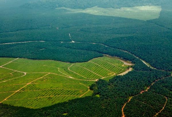 Skovrydning i Amazonas – et undervisningsmateriale til naturteknologi mellemtrin