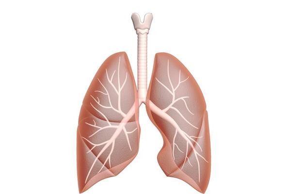Åndedrættet – et undervisningsmateriale til naturteknologi mellemtrin
