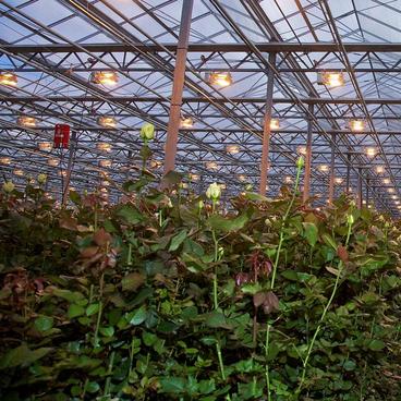Planter er små fabrikker