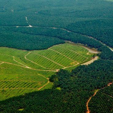 Skovrydning i Amazonas