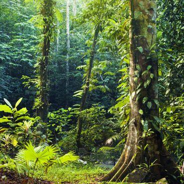 Den tropiske regnskov