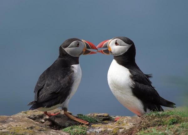 Fuglefjelde – et undervisningsmateriale til naturteknologi mellemtrin