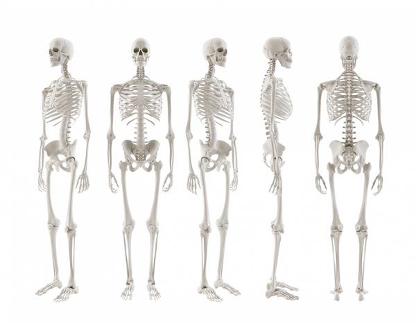 Skelettet – et undervisningsmateriale til naturteknologi mellemtrin