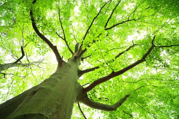 Livets træ – et undervisningsmateriale til naturteknologi mellemtrin