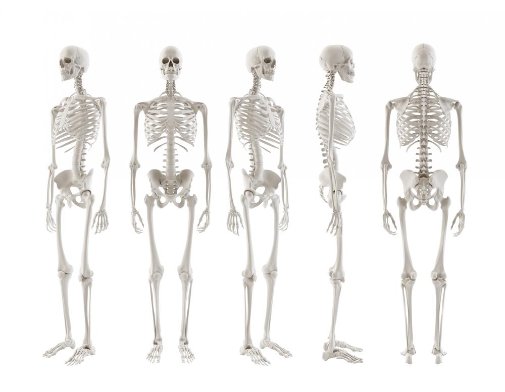 kroppens mindste knogle